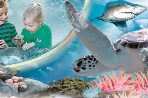 Manly Sea Life 4 Attractions Combo Ticket